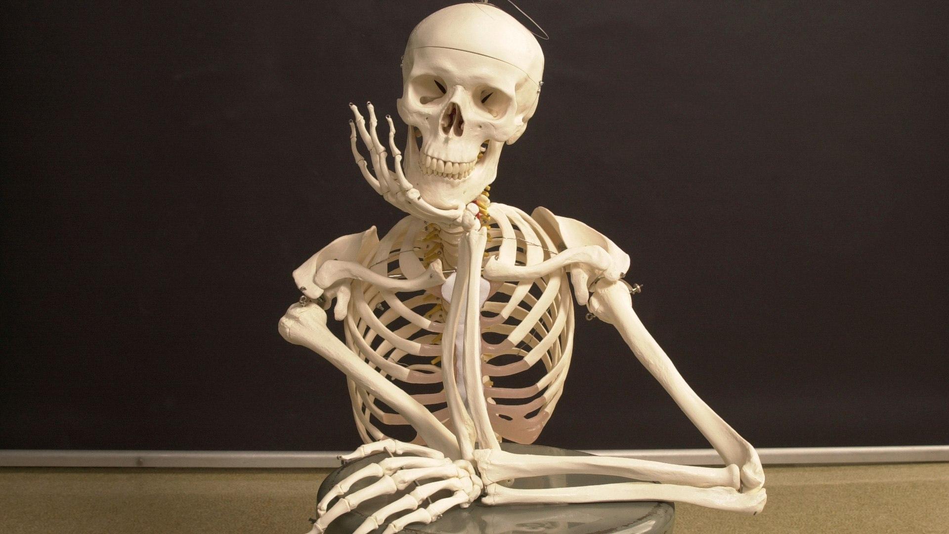Image result for عوامل مؤثر در سلامت استخوان ها