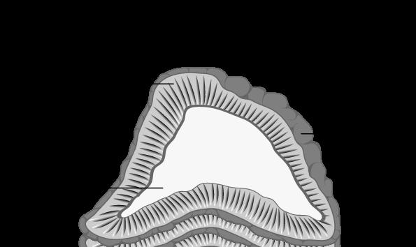 غدهی آدرنال دو بخش اصلی دارد: مدولا و کورتکس.