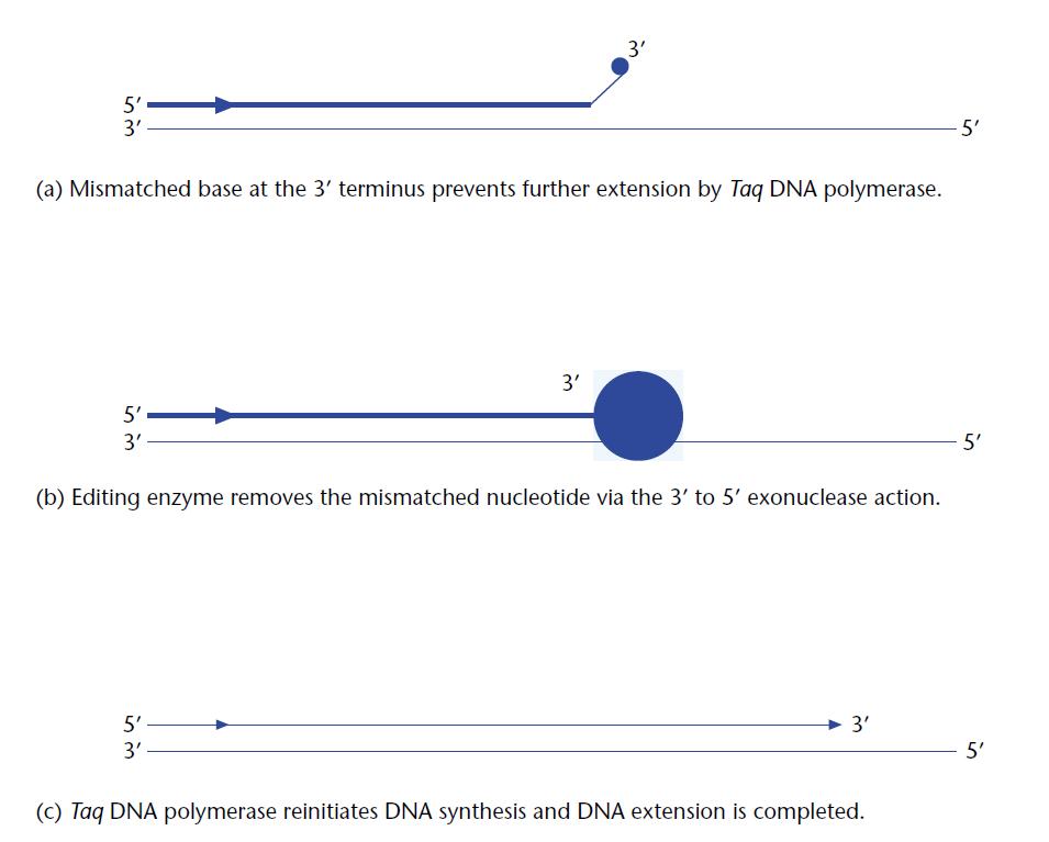 اصول Long PCR