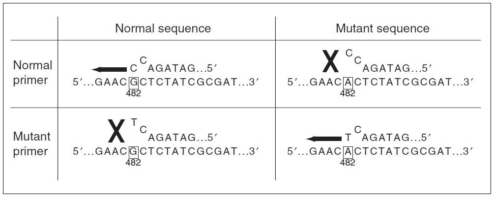 ARMS PCR