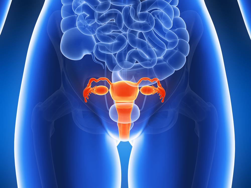 uterus-virtualdr.ir
