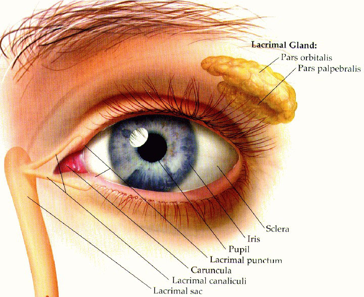lacrimal-gland-virtualdr.ir