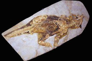 Psittacosaurus-dinosaur