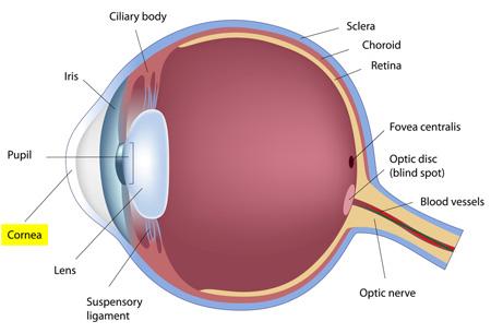 cornea-virtualdr.ir