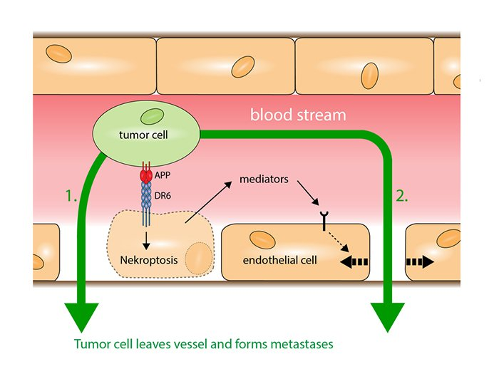 how-cancer-spreads-through-the-bloodstream2-virtualdr-ir