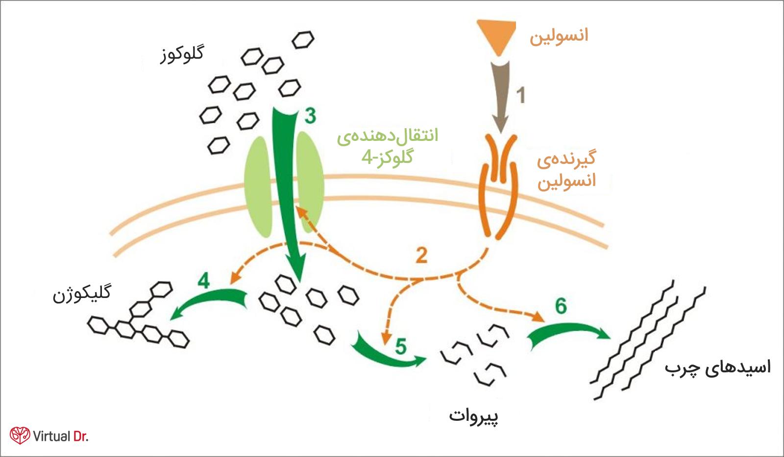 insolin-function-virtualdr-ir