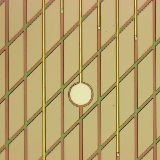 این تصویر نزدیک از صفحهای را در وسط نشان میدهد که نورونها را تحریک خواهد کرد. صفحات کوچکتر هم فعالیت آنها را اندازهگیری خواهند کرد.