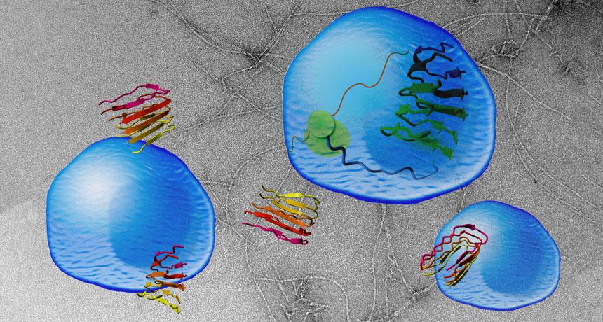 تودههای پروتئینی مححقان موفق به ساخت گونهای از پروتئین تجمعی به نام واسین (Vascin) شدهاند؛ که قادر است فعالیت تجمعی پروتئنی عامل بیماری آلزایمر را تقلید کند. واسین (قرمز/زرد)، قطعهای از پروتئین VEGFR2، الیافی را تشکیل میدهد (الیاف خاکستری در پسزمینه) که قادرند با نفوذ به درون سلول و مهار فعالیت طبیعی VEGFR2 (سبز در مرکز سلول)، سلول را از بین ببرد.