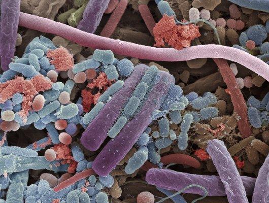 mouth_microbiota_anp-jpg__530x0_q85_subsampling-2