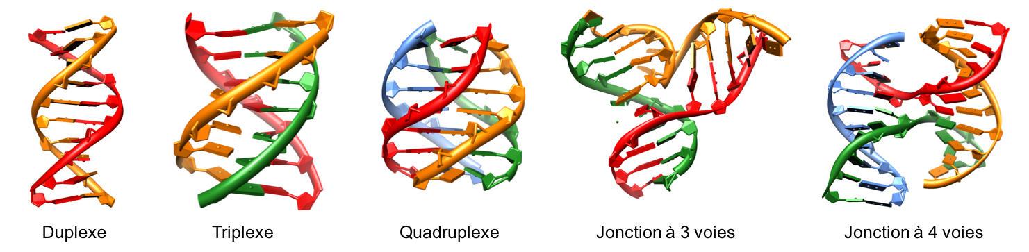 quadruplex_exemples_structures_adn