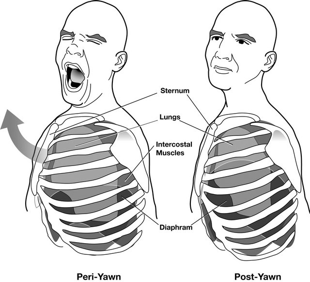 yawning-mechanism-virrtualdr
