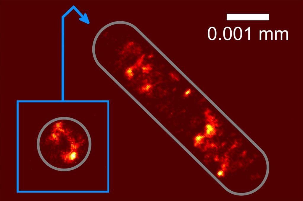 تصویری از پراکندگی محتوای ژنتیکی در باکتری E. coli. صاحب اثر: دانشگاه بیلفلد (Bielefeld University)