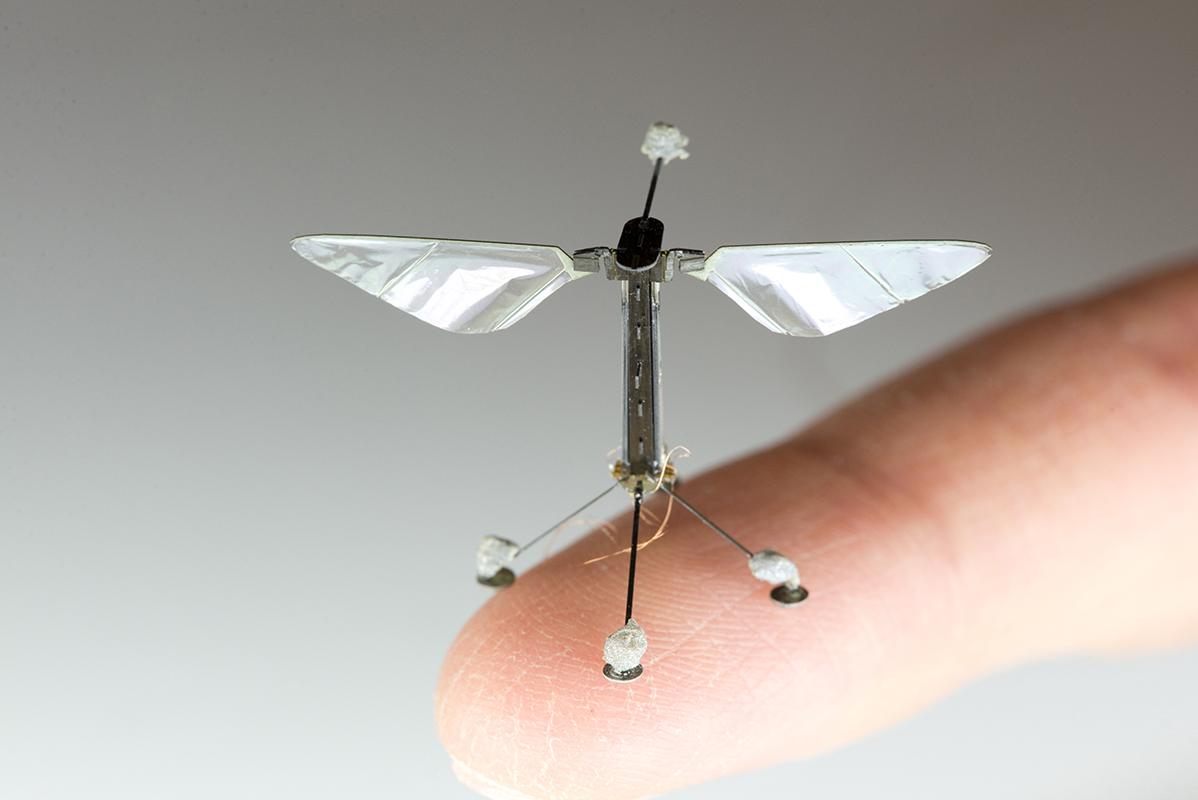 animal-flight-and-flying-drones-01-virtualdr-ir