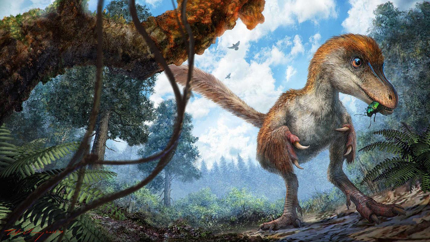 feathered-dino-tail-02-virtualdr-ir