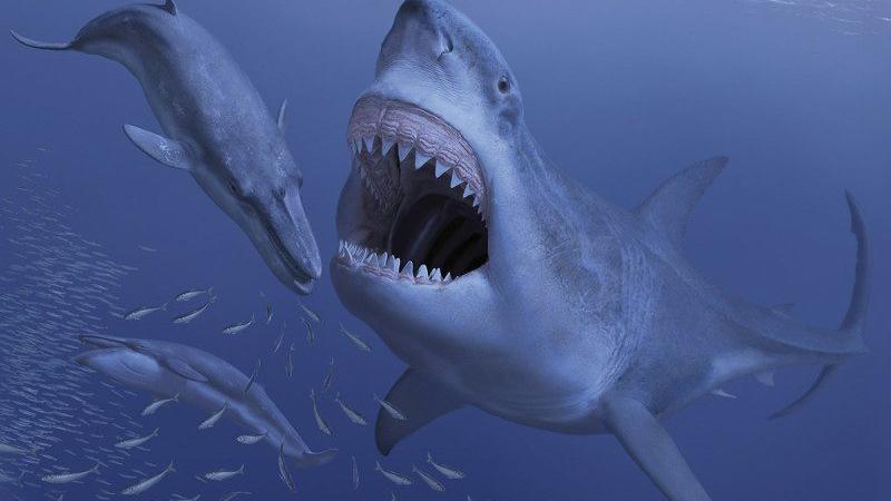 megalodon-shark-prey