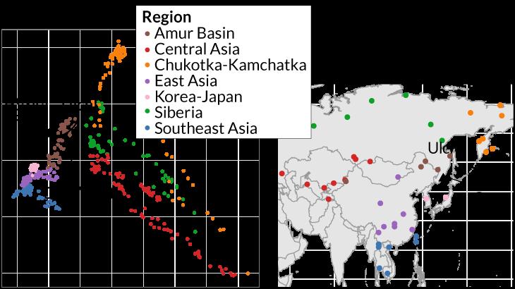 بررسیهای ژنتیکی صورت گرفته روی 561 نفر که جمعیتهای مختلف آسیای امروزی زندگی میکنند (هر رنگ نشاندهندۀ یک منطقۀ مجزا است)؛ نشان داده است که [بقایای] دو زن باستانی (مثلثهای سیاه، چپ) از غار دروازۀ شیطان (Devil's Gate Cave) در روسیه (مکان آن روی نقشۀ سمت راست مشخص شده است) ژنومی مشابه با اولچیها (Ulchi) - گروهی مدرن از شکارچیان-ماهیگیران - دارند. منبع: Science News