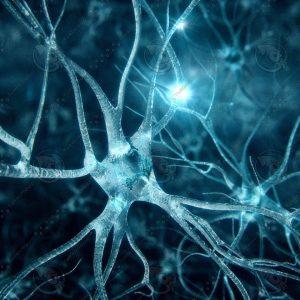 neurons1.JPG7c9ad63d-3990-4511-8be1-be8f123bef2aOriginal