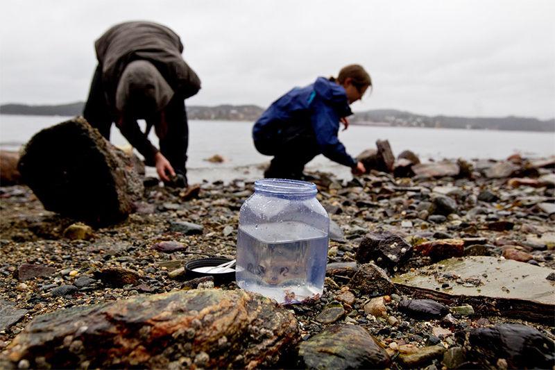 محققان در حال جمعآوری کرمهای روبانی (nemerteans) در برگن نروژ. Eivind Senneset©