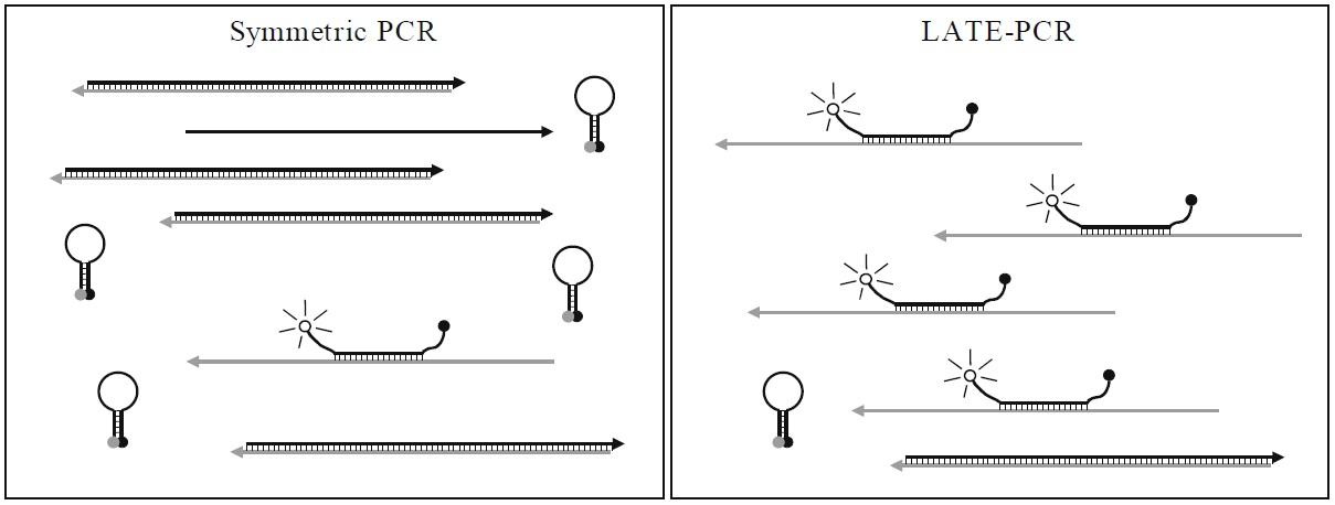 LATE-PCR