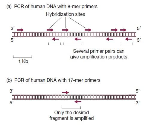 آزمایش PCR