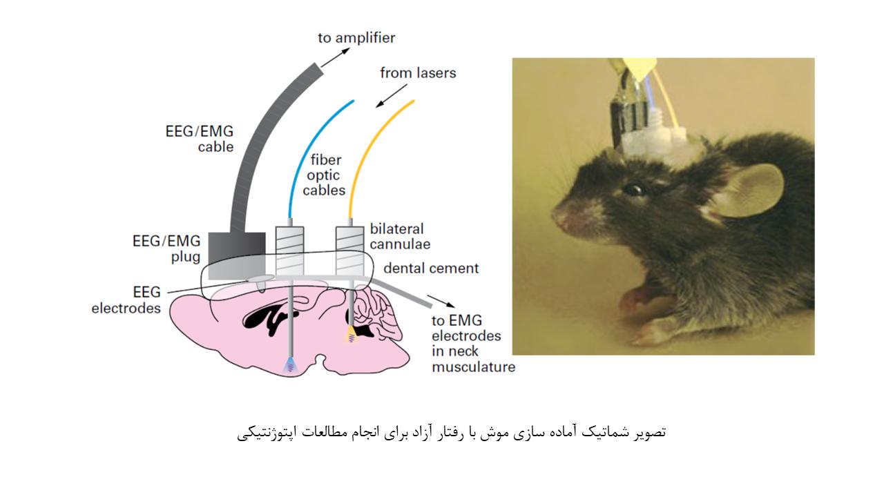 اپتوژنتیک در مطالعات حیوانی