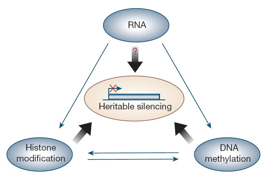 اپی ژنتیک و بیماری