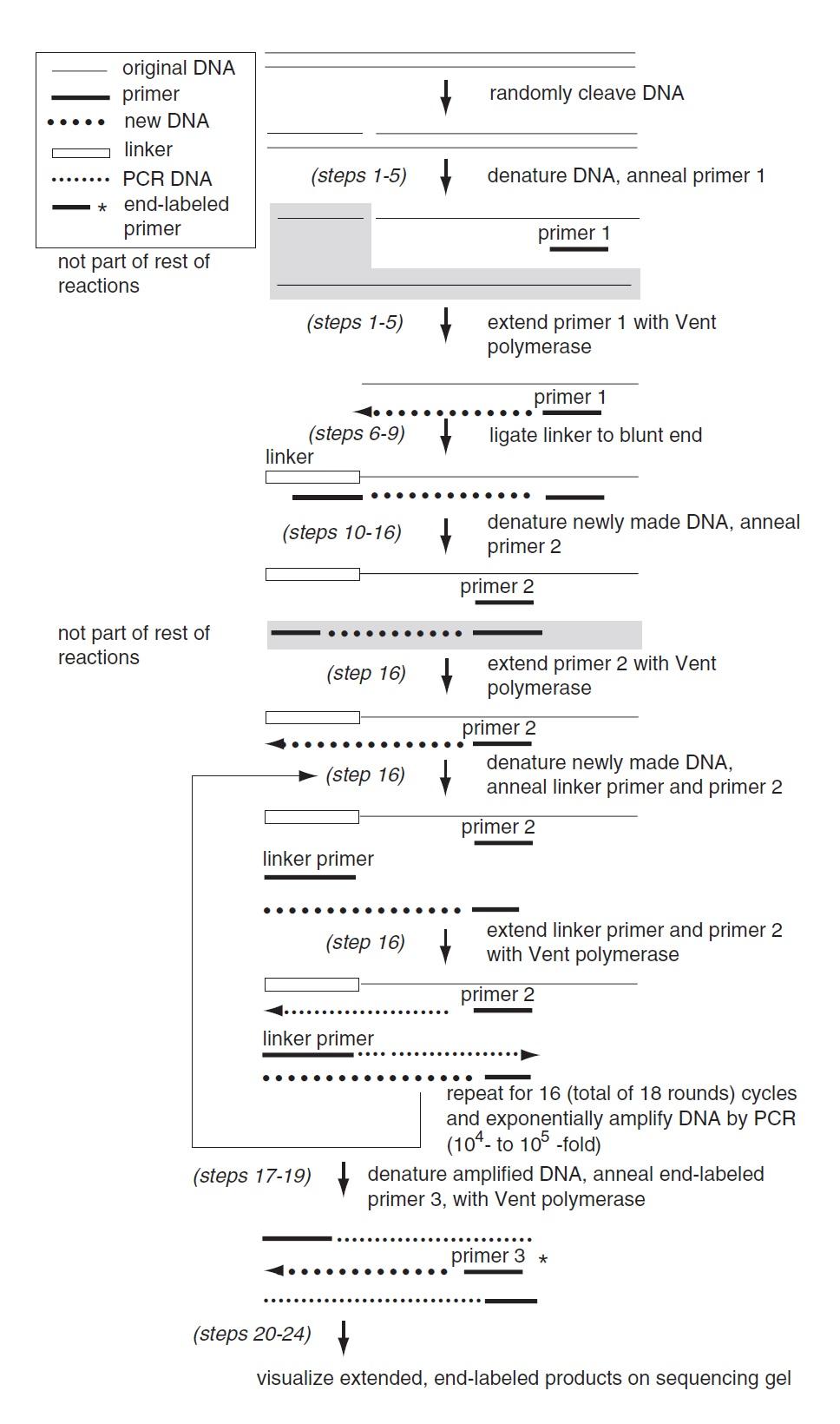 ligation-mediated PCR