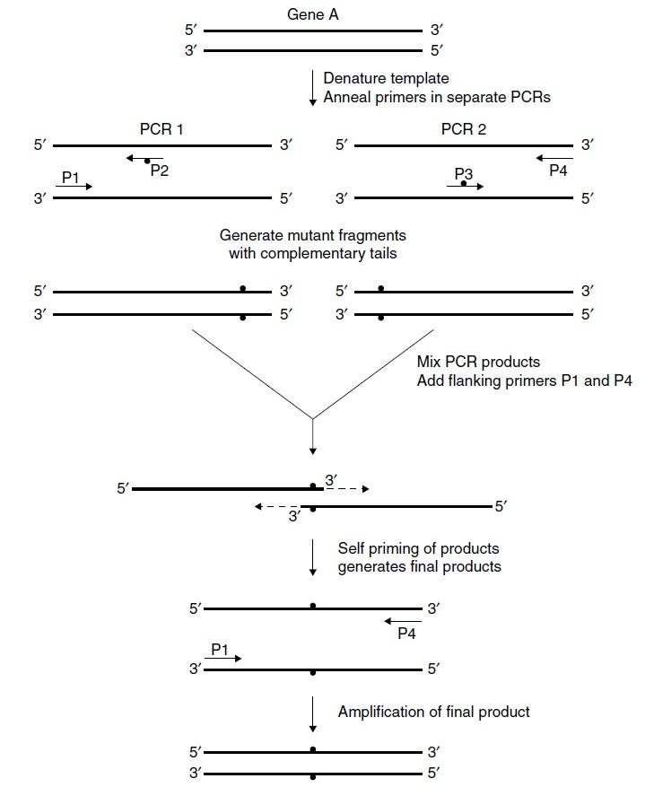 OE-PCR
