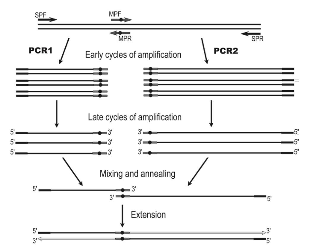 AOE-PCR