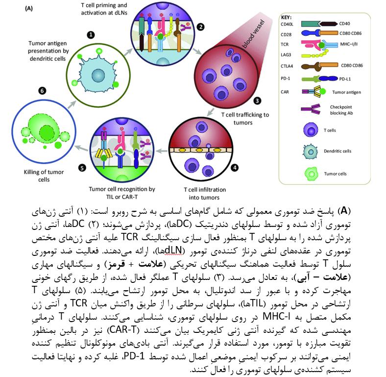 اپتوژنتیک در ایمونوتراپی