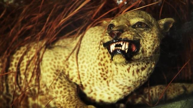 حیوانات منقرض شده در 100 سال