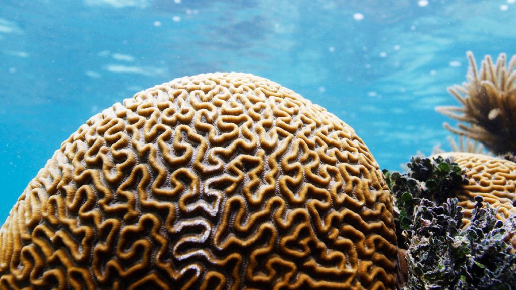 مرجان دریایی